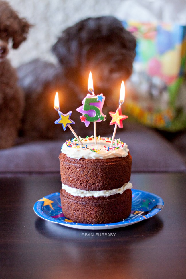 Excellent Dog Birthday Carrot Cake With Neufchatel Cheese Frosting Urban Bakes Funny Birthday Cards Online Sheoxdamsfinfo